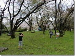 4月9日桜 (10)